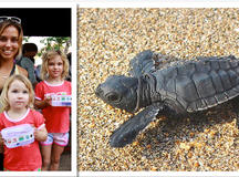 Kuta Beach Sea Turtle Conservation